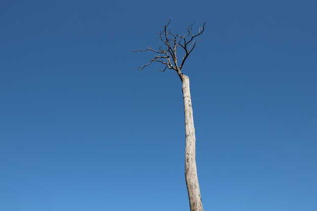 Dead tree and branches on blue sky backgroun in summer