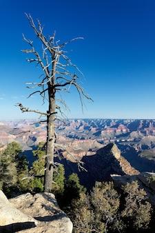 米国アリゾナ州グランドキャニオンの前の枯れ木