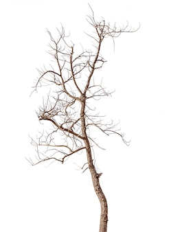 Dead tree isolated