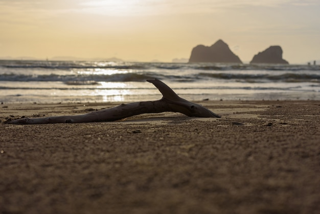 Dead tree log on a sandy beach with sunset background