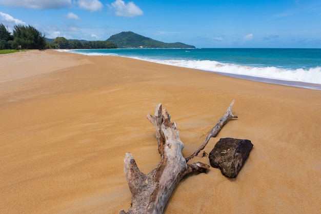 Dead tree at mai khao beach, phuket island, thailand.