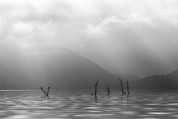 Dead tree on serene lake with morning fog