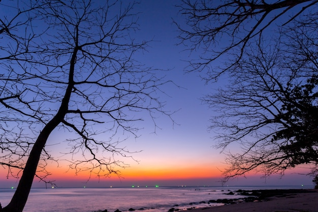 Dead tree at sunset beach