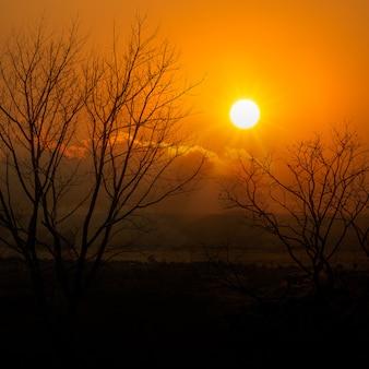 Dead tree on sunset