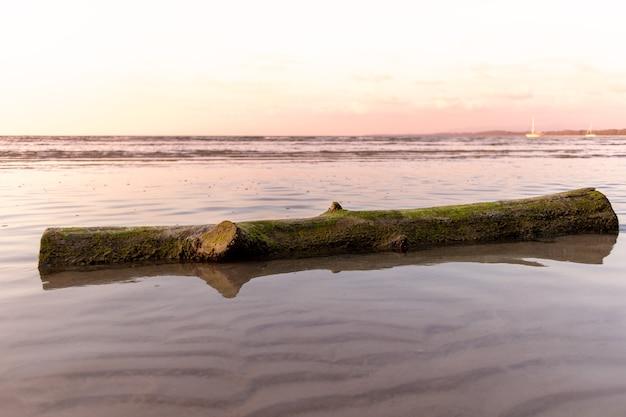 Dead tree trunk lay on the beach