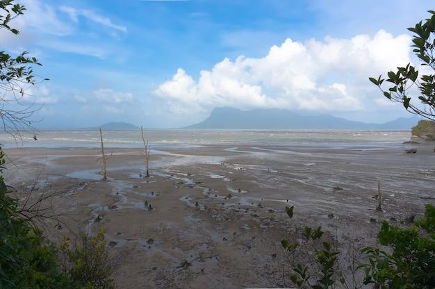 干潮時にビーチで枯れ木