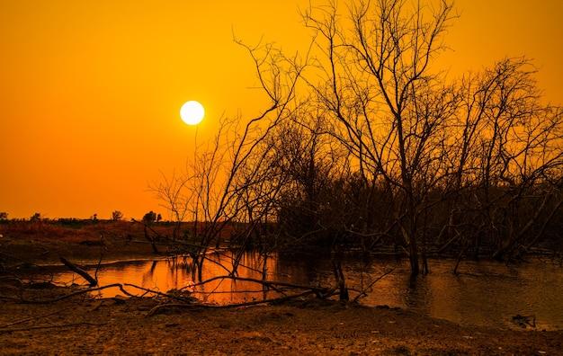 湖とオレンジ色の夕焼け空の背景の枯れ木気候変動と干ばつ土地水危機