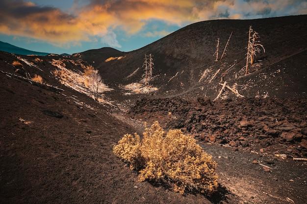 Dead trees on mount etna in sicily.