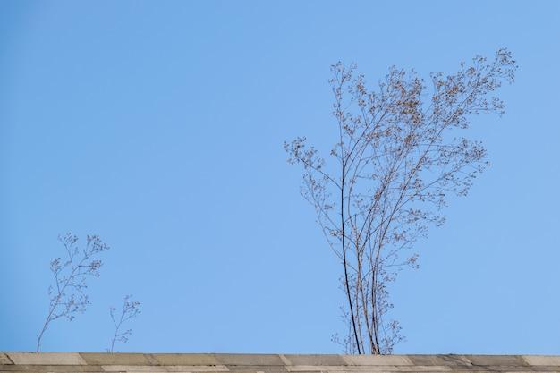 Мертвые деревья под голубым небом