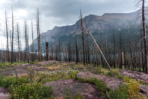 Dead trees in a with mountain range in the background, going-to-the-sun road, glacier national park,