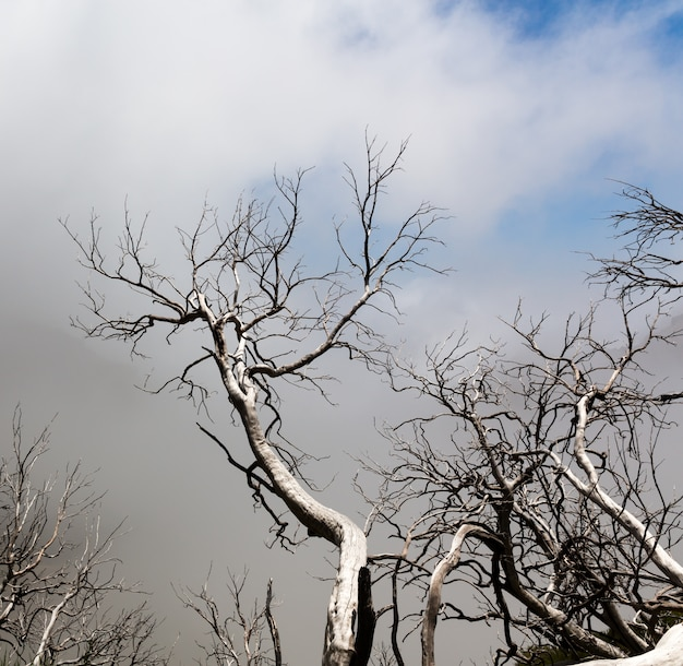 Мертвые деревья