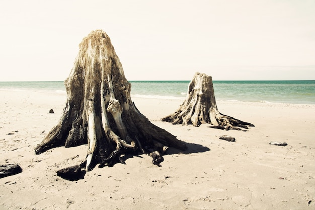 Dead trunks on the beach.