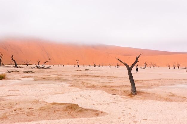 Dead vlei、ソーサスフライ、ナミブ砂漠、ナミビア、南アフリカ共和国の風景