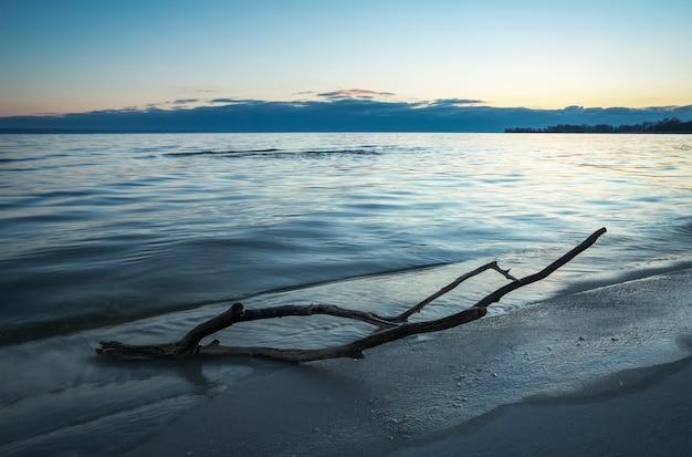 海の枯れ木。ビーチの砂に引っ掛かる