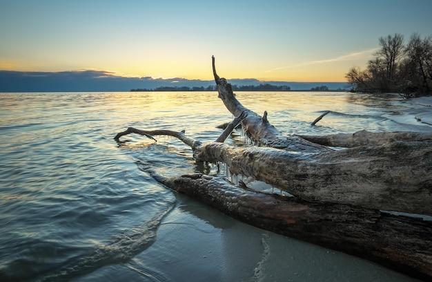 日没時の海の枯れ木。ビーチの砂に引っ掛かる