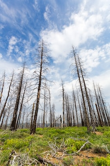 Мертвый лес с зеленой травой и растениями
