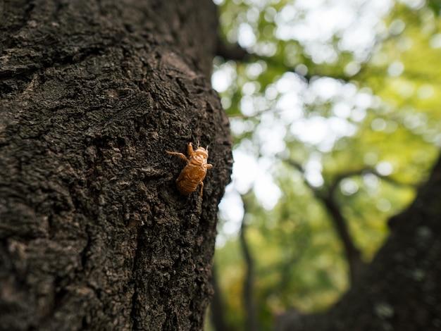 Смерть цикады на дереве в парке