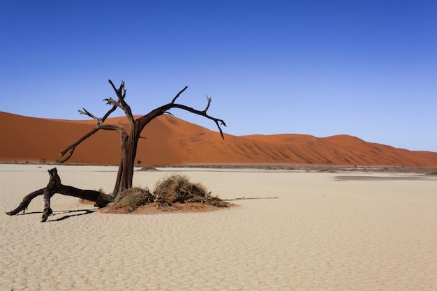 ナミビアの砂漠、ソススフレイ、ヒドゥンフライでの死の木