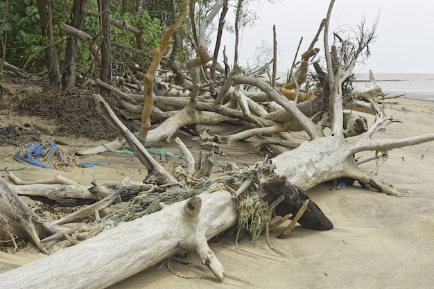 Debris cayenne river, french guiana