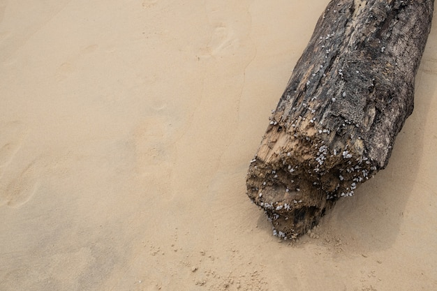Decayed timber on beautiful beach background.