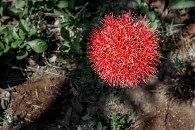 庭に咲く12月の花