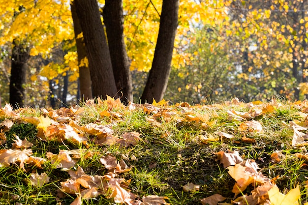 Deciduous foliage in the autumn season, beautiful nature in the autumn season