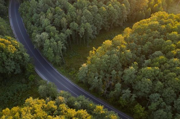 夜明けの落葉広葉樹林。太陽光線が木のてっぺんを照らします。アスファルト道路が森の中を走っています。