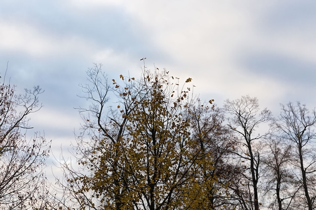 Лиственный лес при опадании листвы осенью и на деревьях цвет листвы меняется в зависимости от вида дерева.