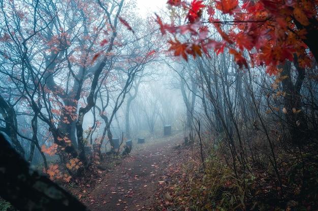 가을 숲에서 자연 터널과 푸른 안개의 통로가있는 낙엽 단풍 나무