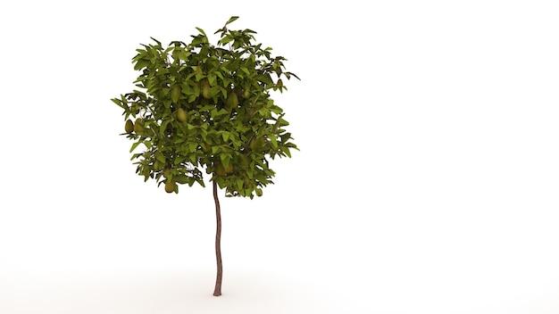 흰색 바탕에 배와 낙 엽 나무입니다. 격리 된 정원 요소, 과일, 3d 일러스트와 함께 녹색 나무.