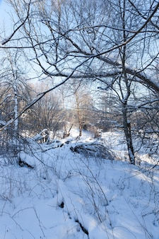 Deciduous trees covered with snow and frost in winter