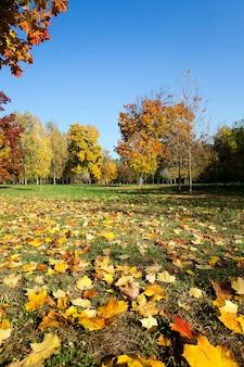 가을 시즌에 공원에서 자라는 낙엽수.