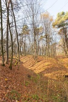 秋の季節に葉なしで成長する落葉樹