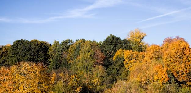 Лиственные деревья осенью освещенные солнечным светом