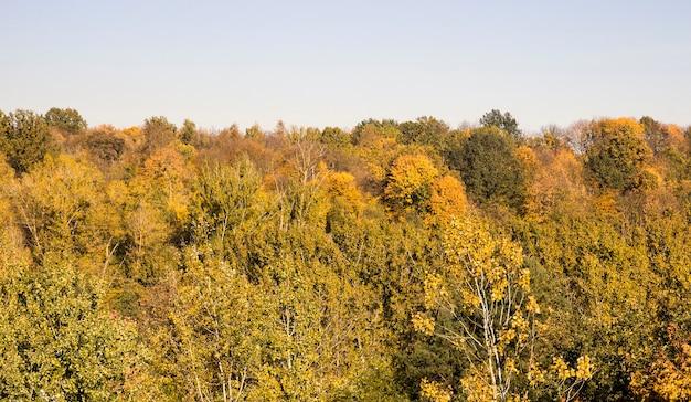 Лиственные деревья в осенний сезон