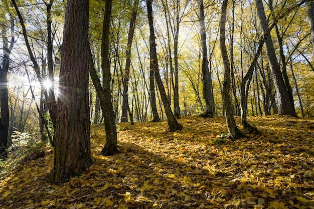 Лиственные деревья осенью