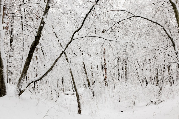 冬季の落葉樹