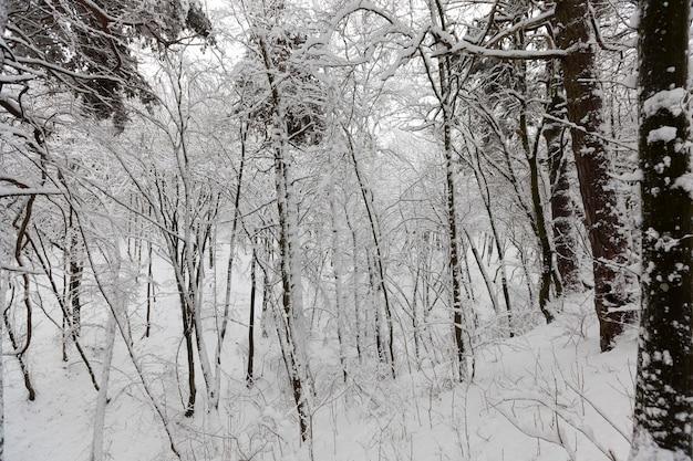 冬の落葉樹、降雪後の自然の寒い凍るような冬の天候、公園での降雪後のさまざまな品種の落葉樹