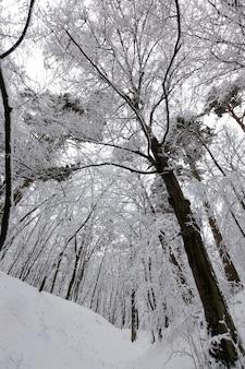 Листопадные деревья зимой, холодная морозная зимняя погода