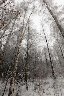 Лиственные деревья зимой, зимняя погода в парке или лесу и лиственные деревья, морозная зима после снегопада с голыми лиственными деревьями Premium Фотографии