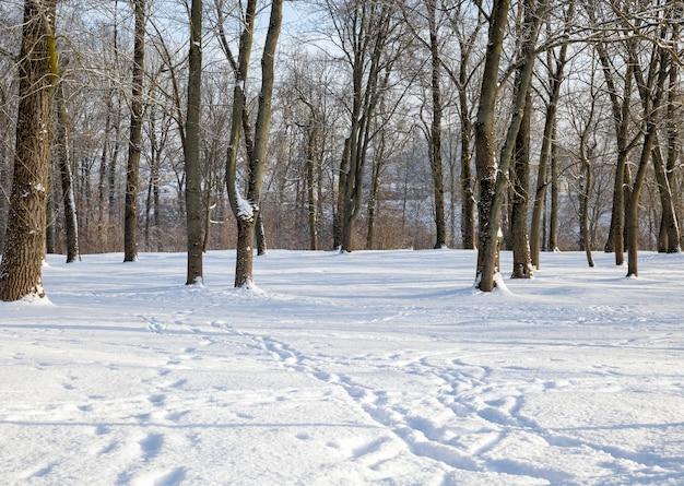 Лиственные деревья под снегом зимой