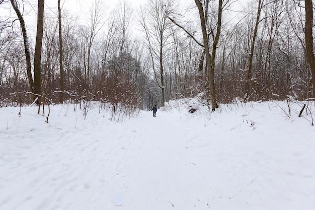 Лиственные деревья без листвы в зимний период, голые деревья, покрытые снегом после снегопадов и метелей, настоящее природное явление.