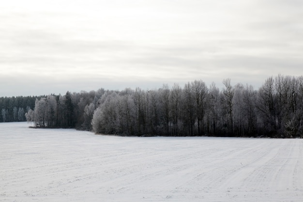 Листопадные деревья без листвы в зимний период