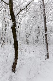 Лиственные деревья без листьев на снегу после метелей и снегопадов, природных явлений в зимний сезон с растениями и деревьями без листьев
