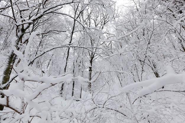 吹雪や降雪後の雪の中に葉のない落葉樹、植物や葉のない木がある冬の自然現象