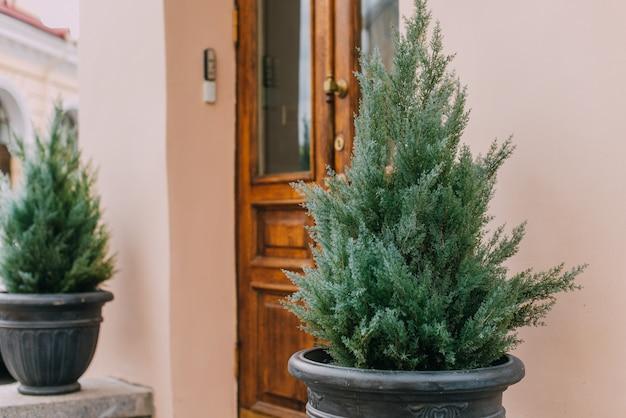 Декларативные сосны в горшках перед входом и старой дверью.