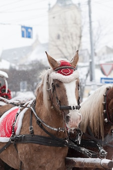 Decorated christmas horses and carriage.