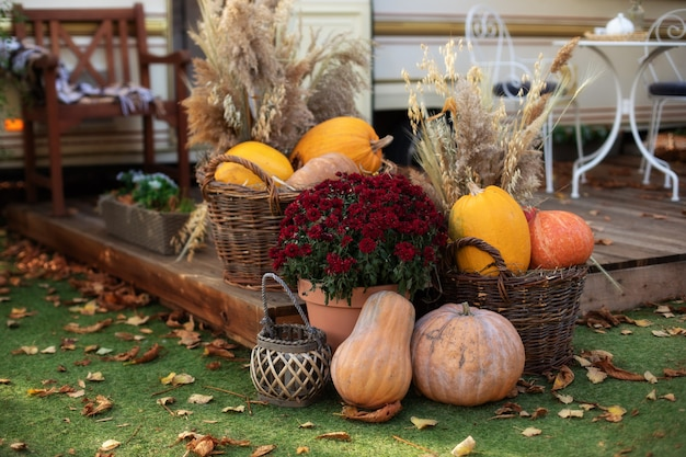 Decorated entrance to house with pumpkins in basket and chrysanthemum. front porch decorated for halloween, thanksgiving, fall season. exterior terrace with garden furniture. pumpkins on steps house.