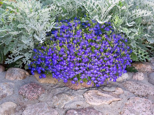 장식 요소로 돌과 덤불로 장식 된 화단. 조경 설계. 집 정원의 돌 조경.