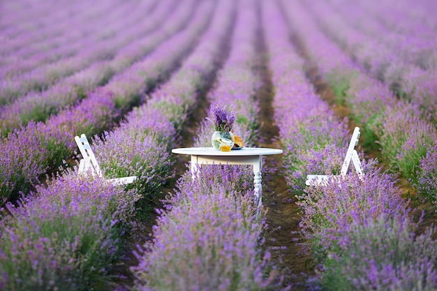 Decorated table and chairs in between lavender patches